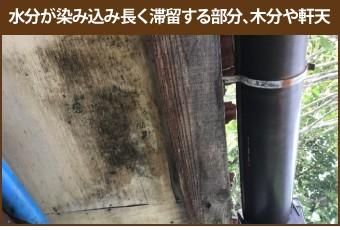 水分が染み込み長く滞留する部分、木分や軒天